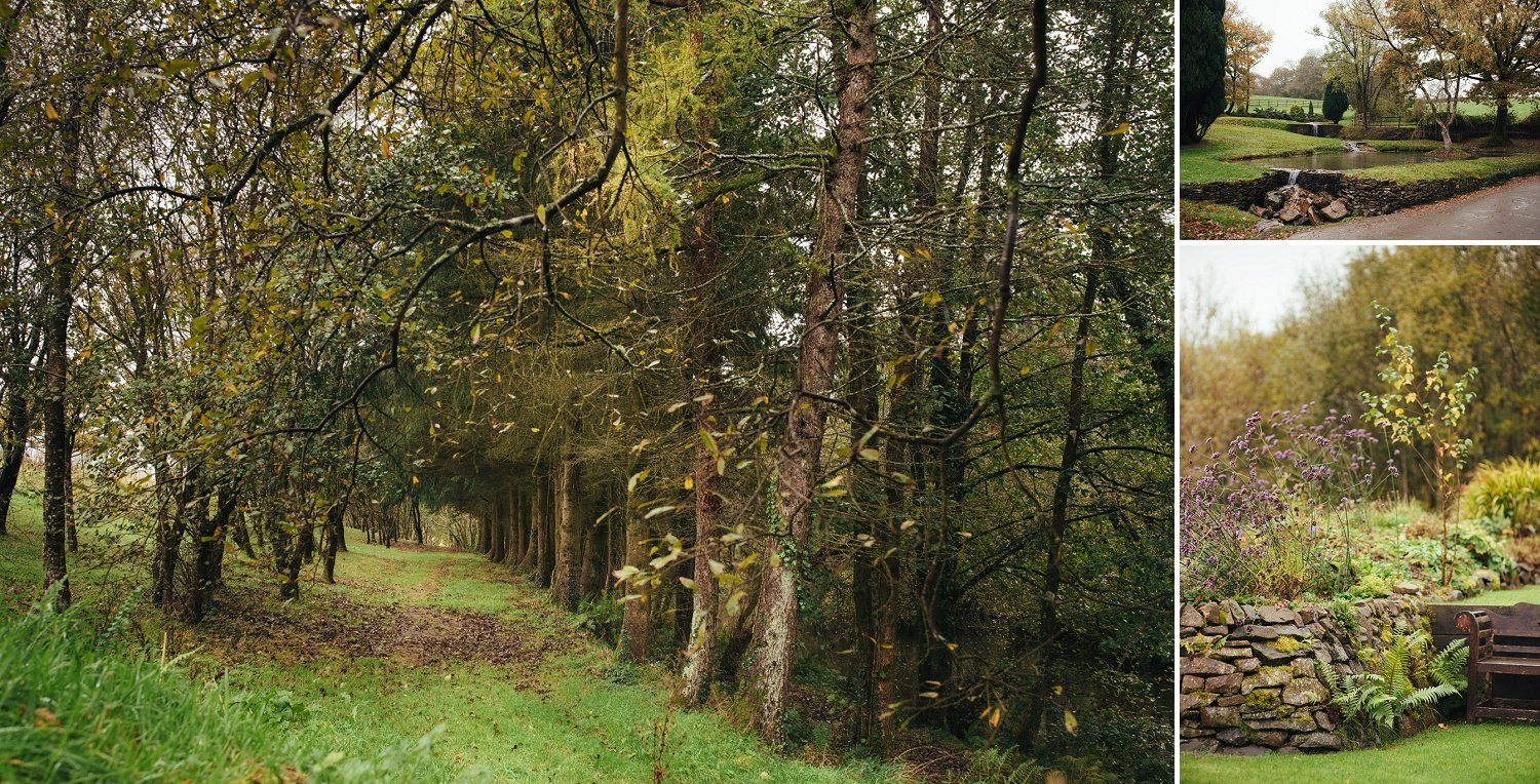 Forest path at Tree Top Escape in Devon